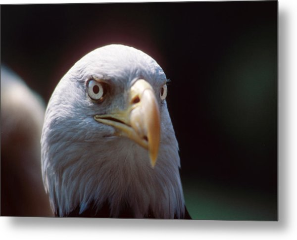 The Price Of Freedom Metal Print by Carl Purcell
