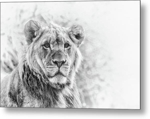 Metal Print featuring the photograph The Prince by Philip Rodgers