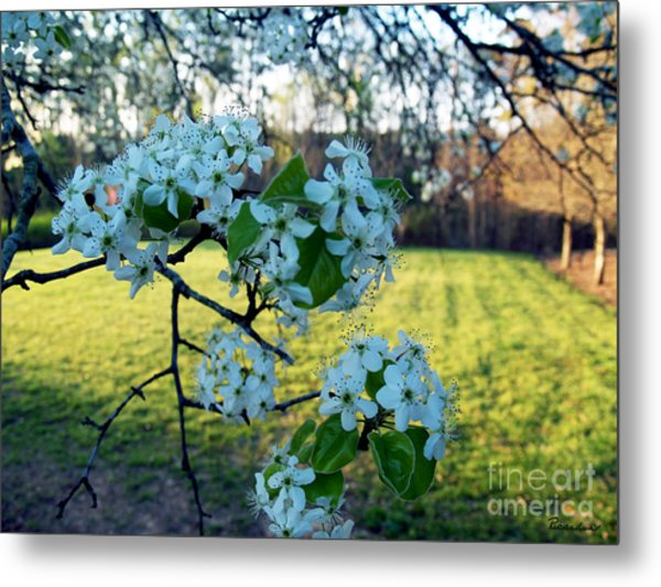 The Promise Of Spring 1c Metal Print