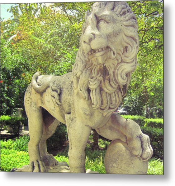 The Proud Lion  Metal Print by JAMART Photography