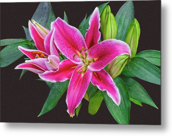 The Pulchritude Of Lady Lily Metal Print