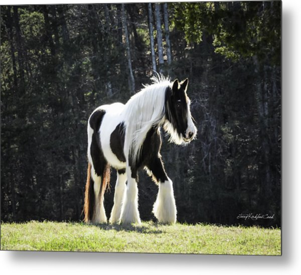 The Pumpkin Mare Metal Print