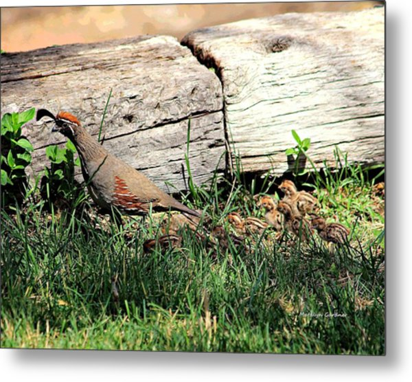 The Quail Family Metal Print