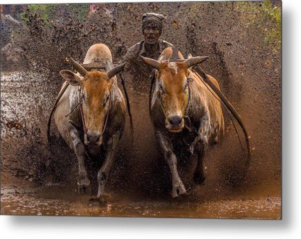 The Racing Cows Metal Print