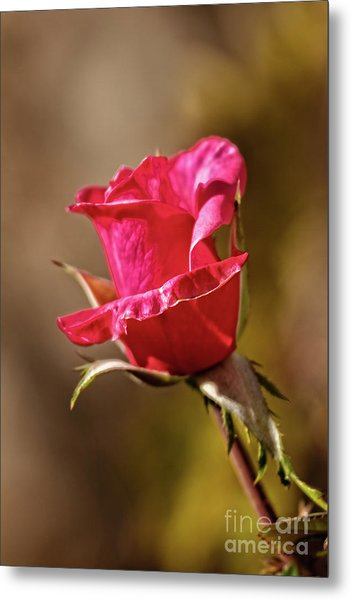 The Red Bud Metal Print
