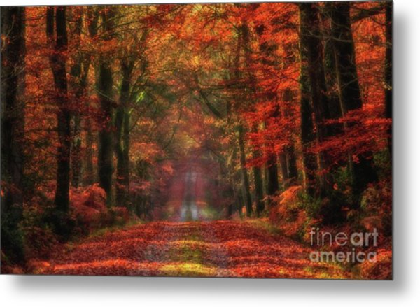 The Red Path 2 Metal Print