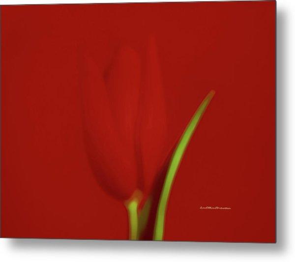 The Red Tulip Art Photograph 2 Metal Print