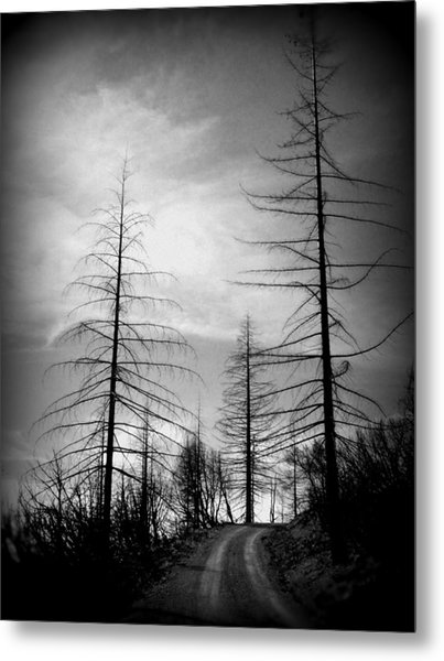 The Road Not Taken    Up On Hwy 2509 Metal Print