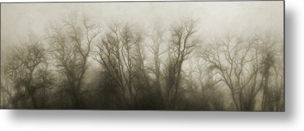 The Secrets Of The Trees Metal Print