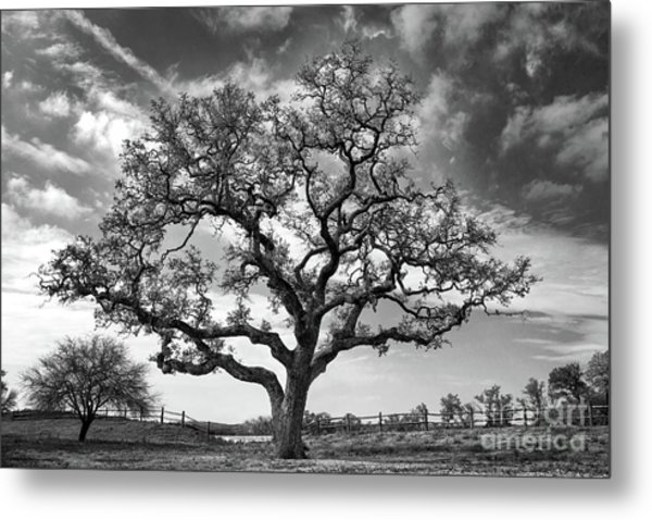 Metal Print featuring the photograph The Sentinel Bw by Jemmy Archer