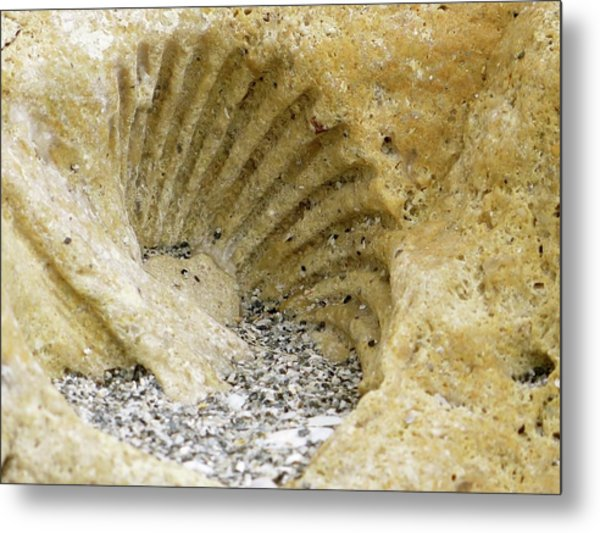 The Shell Fossil Metal Print