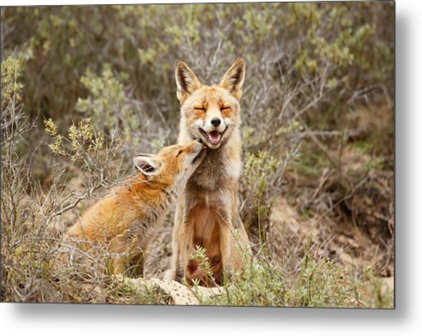 The Smiling Vixen And The Happy Kit Metal Print