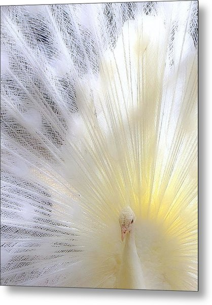 The Softer Side Of White Metal Print