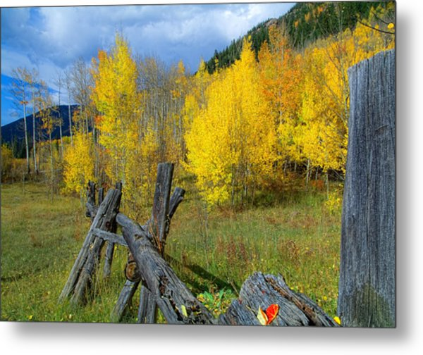 The Song Of Aspens Metal Print by Tim Reaves