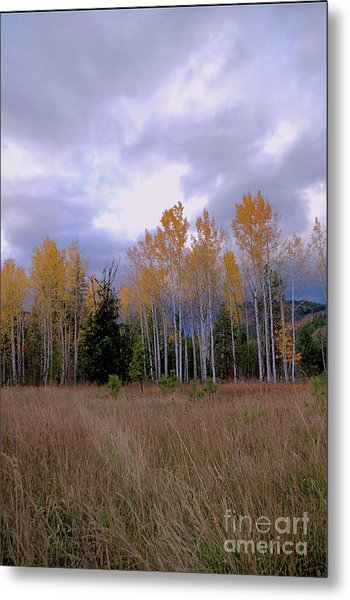 The  Song Of The Aspens 2 Metal Print
