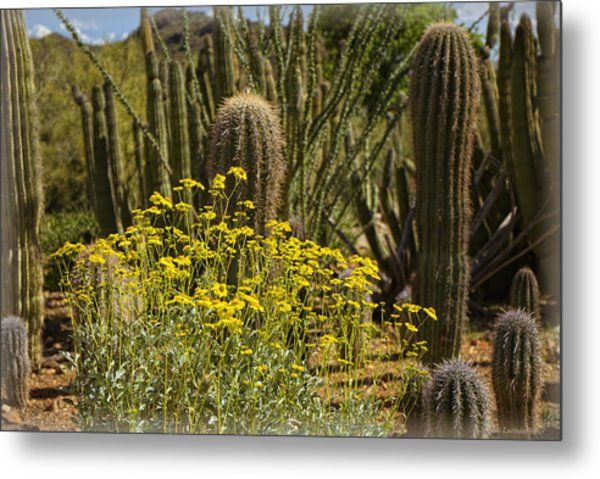 The Song Of The Sonoran Desert Metal Print