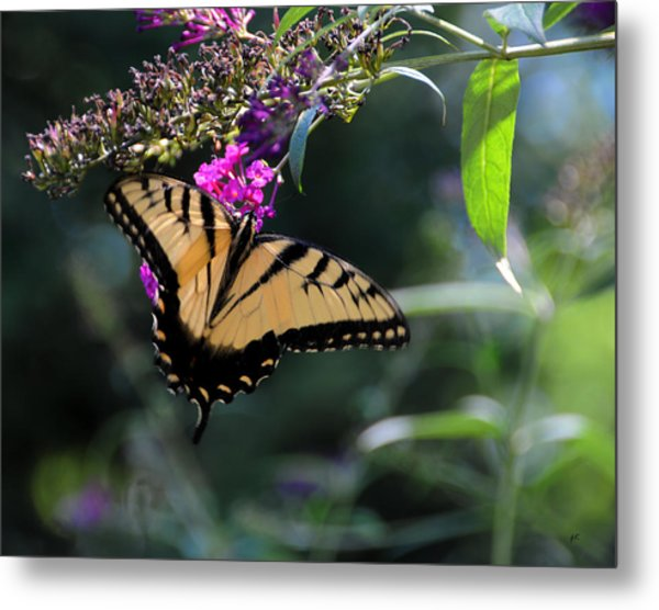 The Splendor Of Nature Metal Print