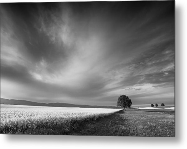 The Spring Leader Metal Print