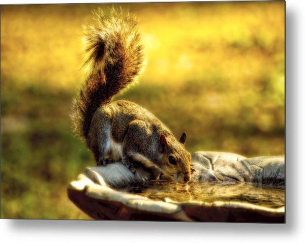 The Squirrel Metal Print