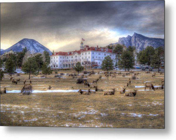 The Stanley With Elk Metal Print
