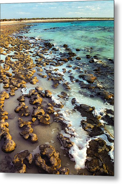 The Stromatolite Family Enjoying Its 1277500000000th Sunset Metal Print
