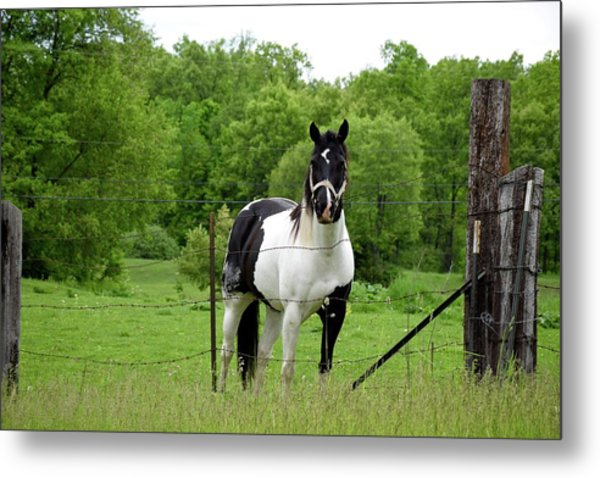 The Strong Horse Metal Print