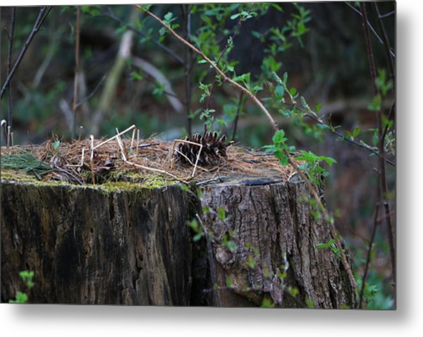 The Stump Metal Print