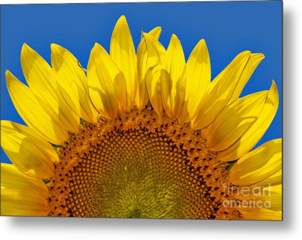 The Sun Also Rises Metal Print by Wendy Mogul