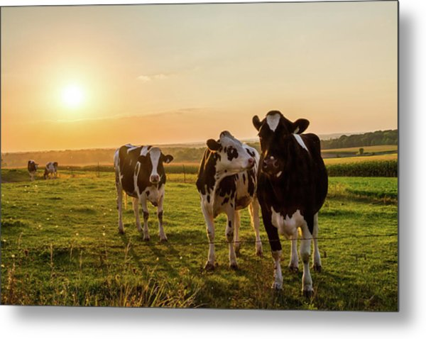 The Sunset Graze Metal Print