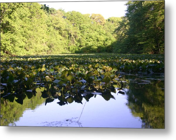The Swamp Metal Print by Dennis Curry