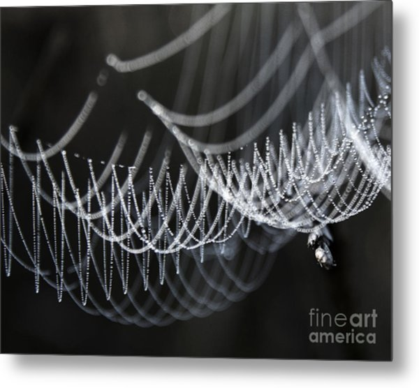 The Tangled Webs We Weave Metal Print