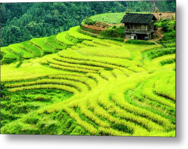 The Terraced Fields Scenery In Autumn Metal Print