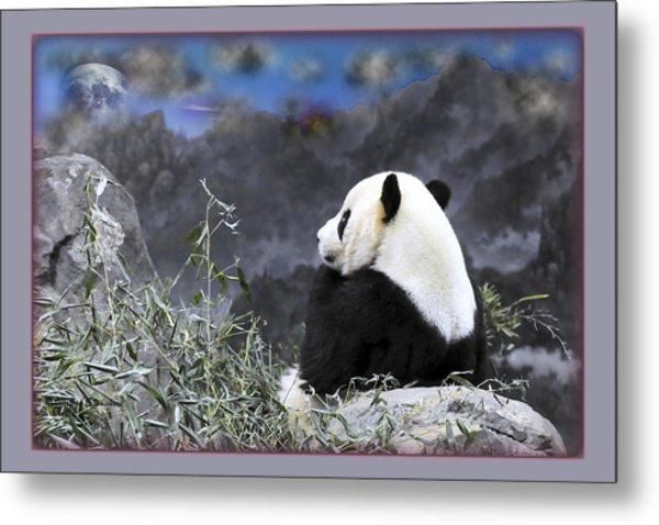 The Thinker Tai Shan In Repose Giant Panda  Metal Print by Jonathan Whichard