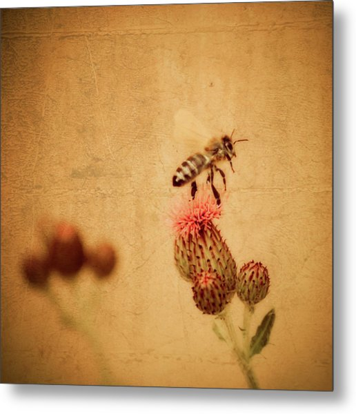 The Thistle And The Bee Metal Print