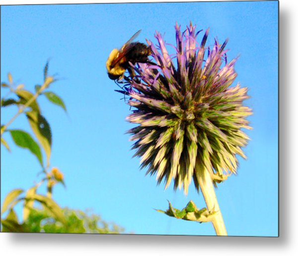 The Thistle And The Bee. Metal Print