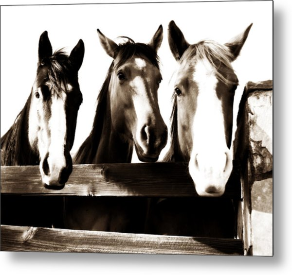 The Three Amigos In Sepia Metal Print by Michelle Shockley