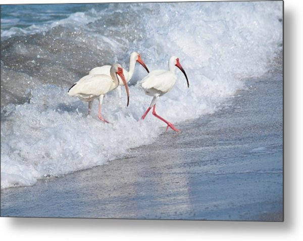 The Tide Of The Ibises Metal Print