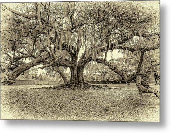 The Tree Of Life Sepia Metal Print