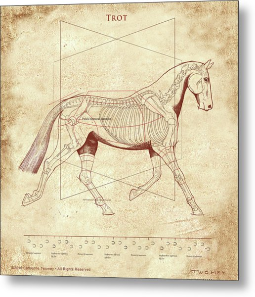 The Trot - The Horse's Trot Revealed Metal Print