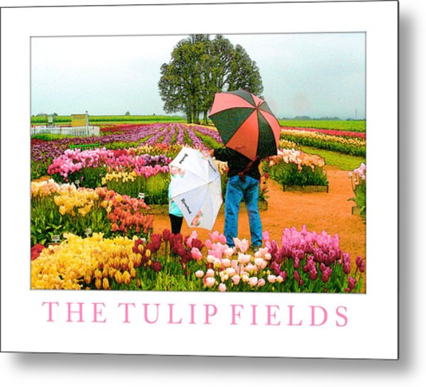 The Tulip Fields Metal Print by Margaret Hood