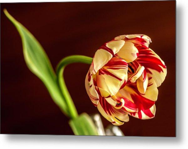 The Tulip's Bow Metal Print
