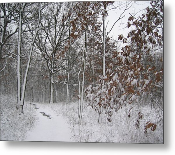 The Unbeaten Path Metal Print