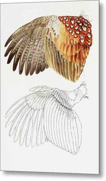 The Upper Side Of The Pheasant Wing Metal Print
