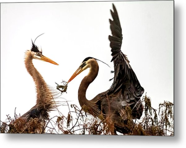 The Valentine's Gift Metal Print