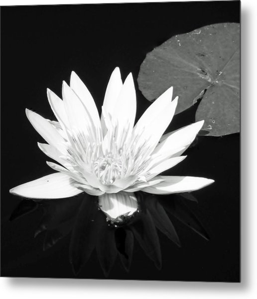 The Vintage Lily II Metal Print