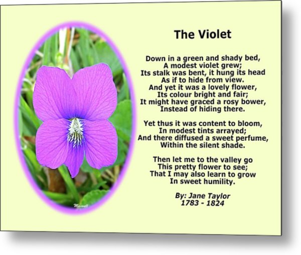 The Violet Classical Wildflower Nature Poetry By Jane Taylor Metal Print by Maxwell