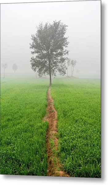 The Walking Tree Metal Print