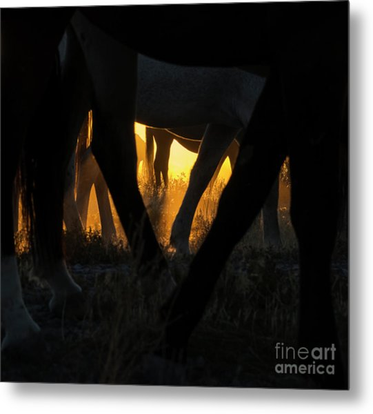 The Wandering Few Metal Print by Nicole Markmann Nelson