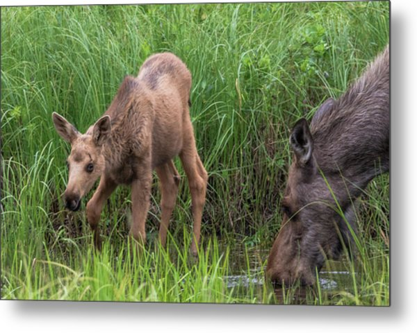 The Watering Hole Metal Print