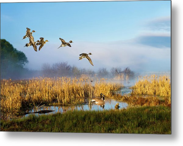 The Wetlands Crop Metal Print